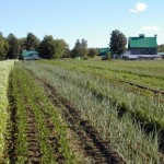La Généreuse - Champs de légumes avec vue sur la grange centenaire