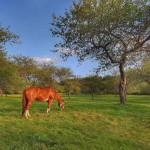 chevaux, La Généreuse