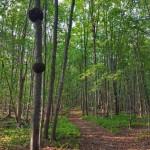 sentiers en forêt, La Généreuse